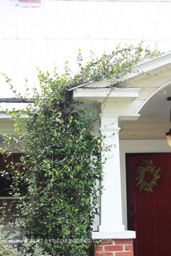 confederate jasmine over front porch entrance