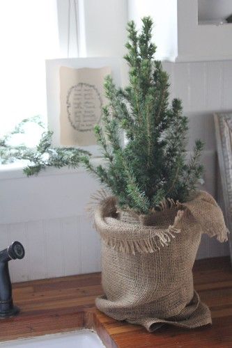 a tiny tree in the kitchen