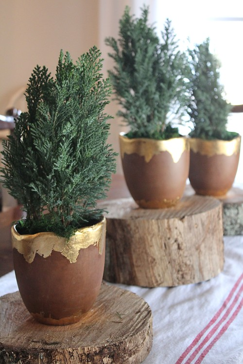 tiny trees for a centerpiece