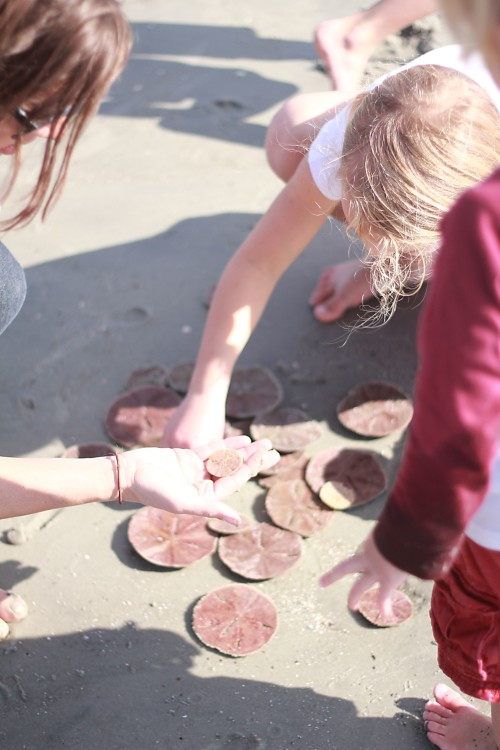 finding sand dollars